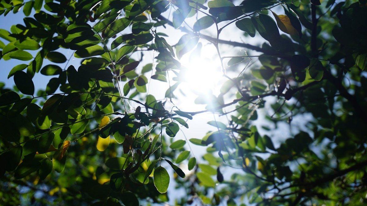 מסנן אור LT באתר מאיר להב